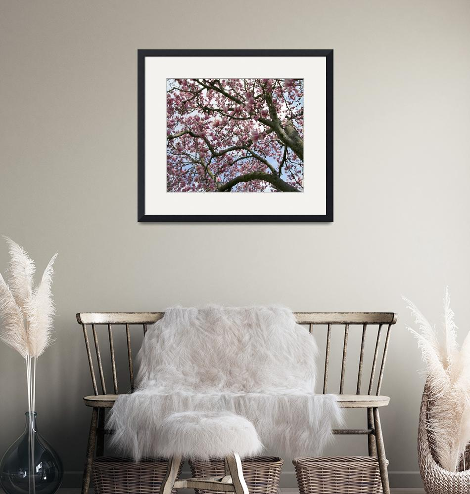 """""""Magnolia 1H8167""""  by jimcrotty"""