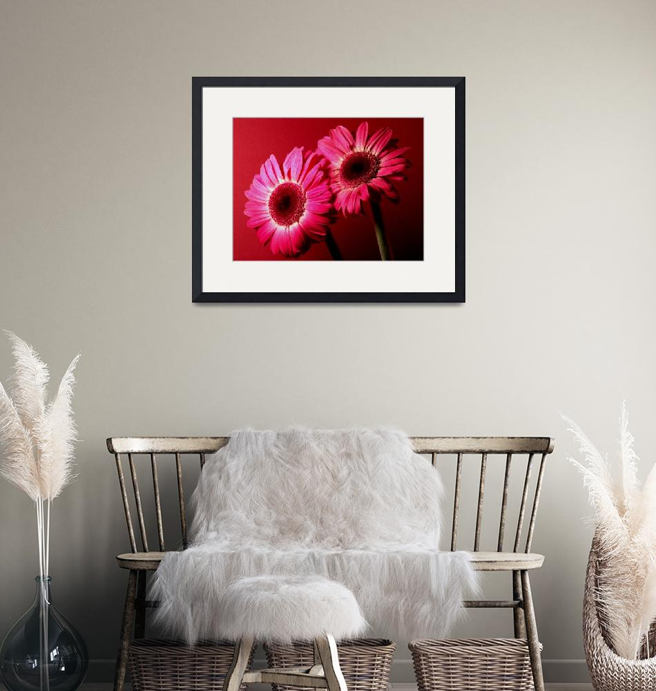 """""""Red Gerbera Daisies Sensational"""" (2006) by Infomages"""