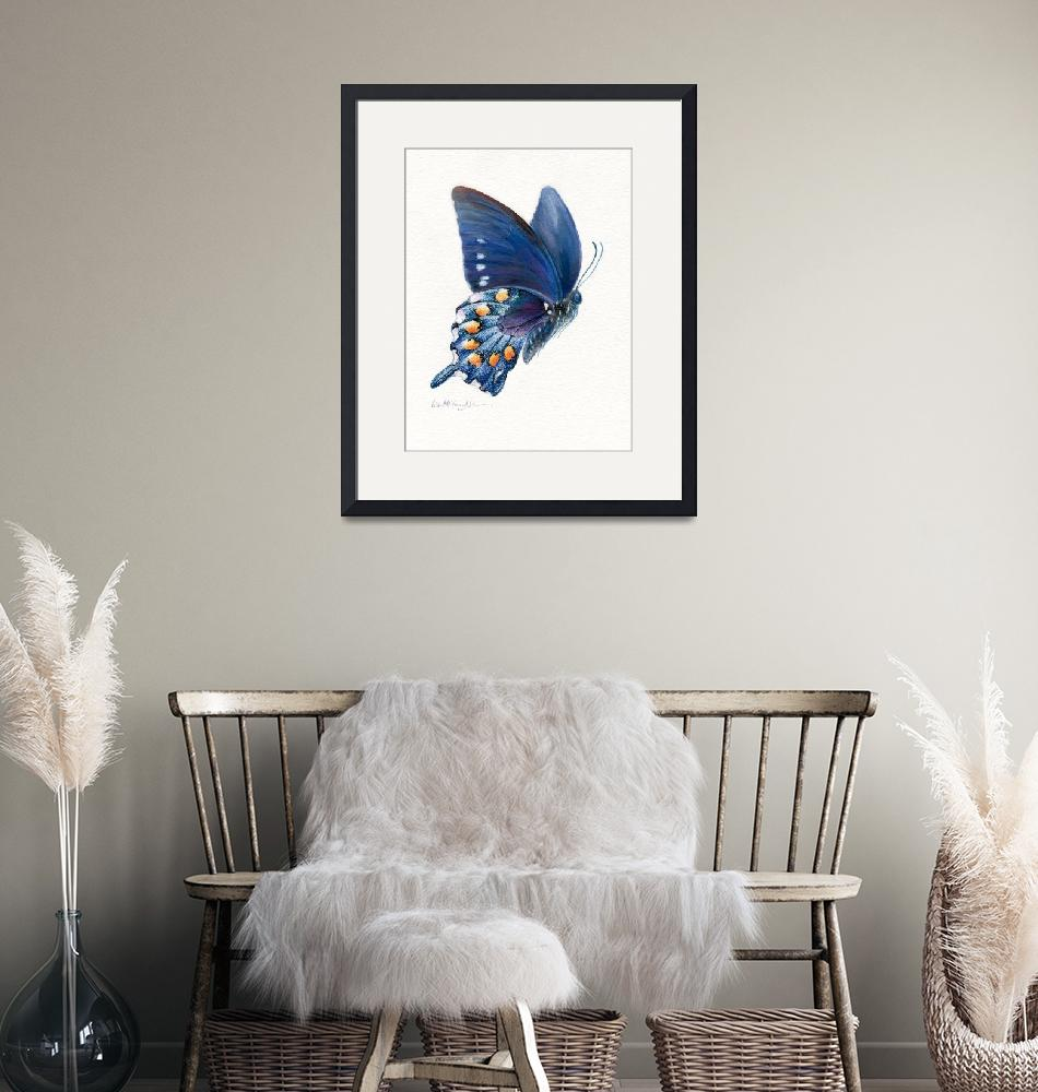 """""""Pipevine swallowtail butterfly in flight"""" (2008) by LisaMclaughlin"""