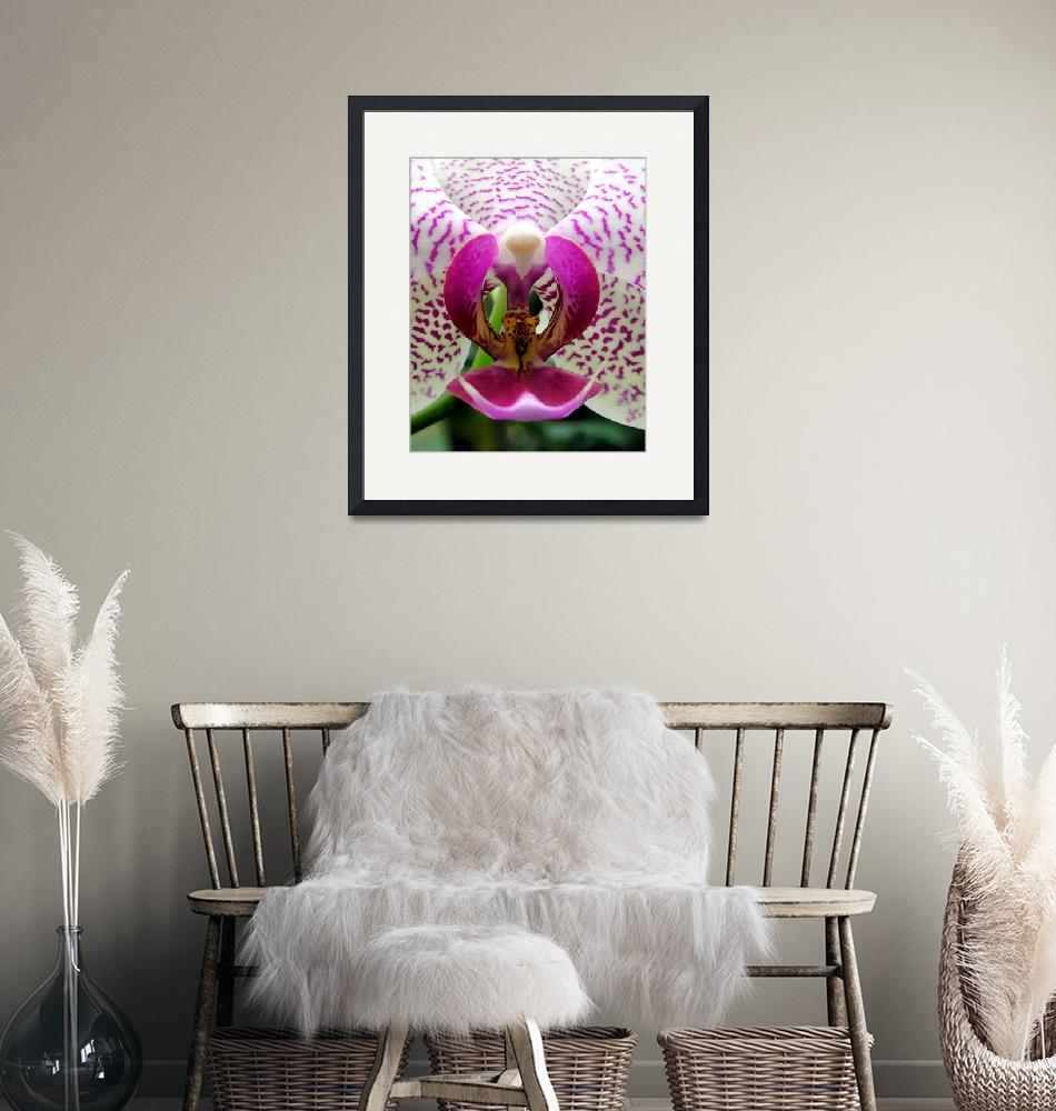 """""""Orchid - pink and white Phalaenopsis""""  by Stevebb"""