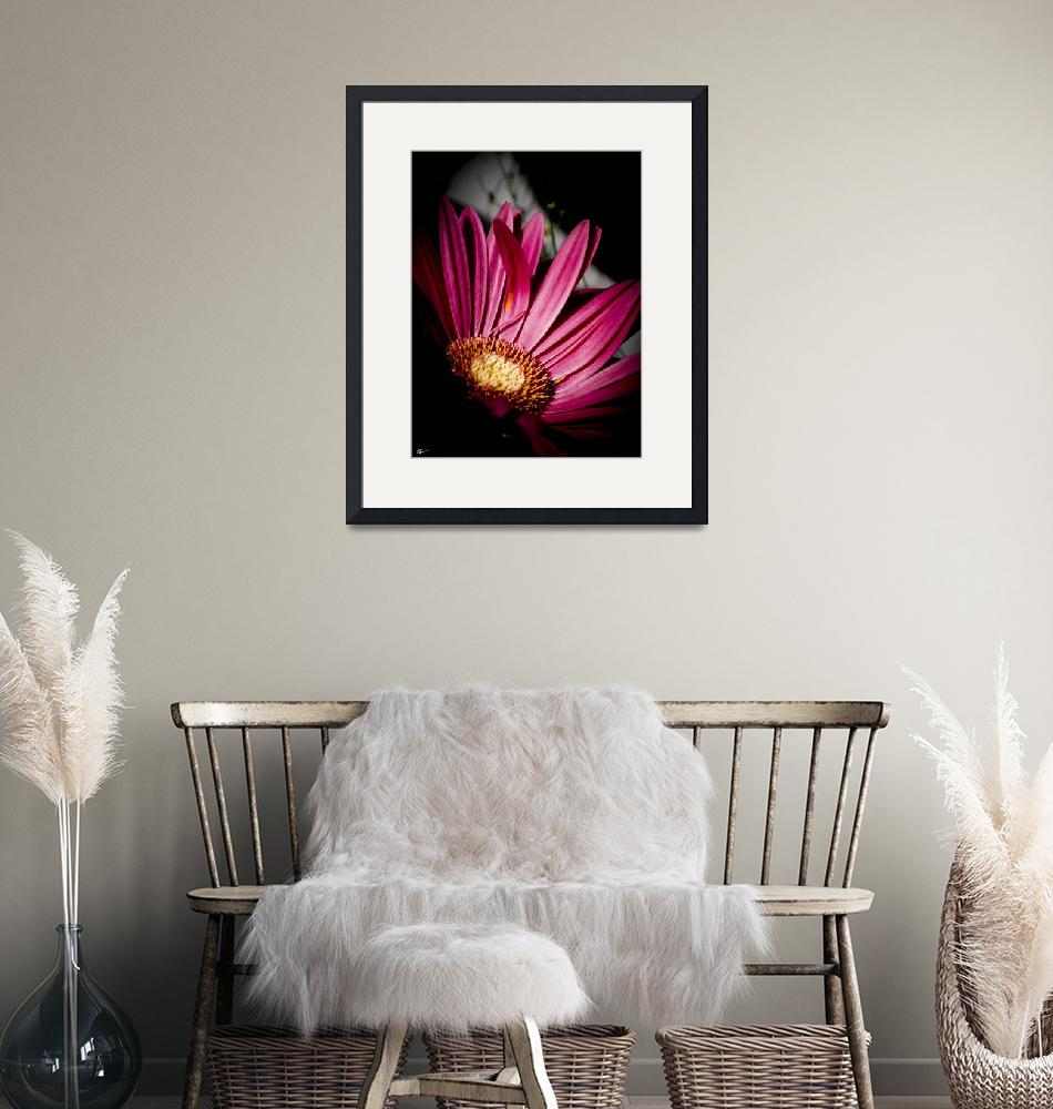 """""""Pink Gerbera Daisy""""  (2013) by NCCreations"""