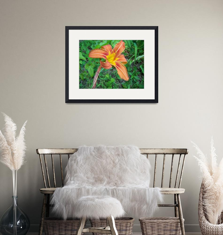 """""""Tiger Lily""""  (2008) by Marlewen"""