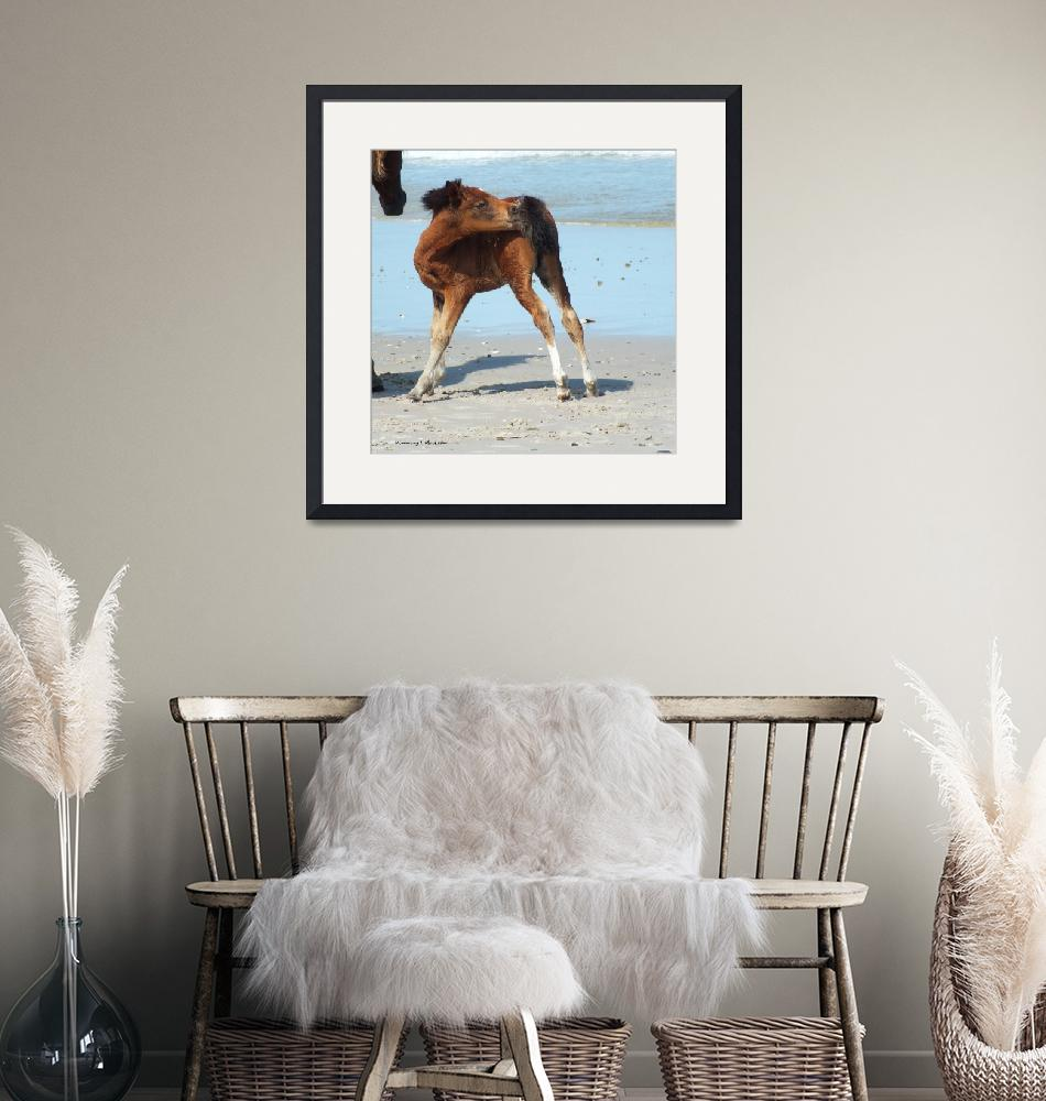 """""""Assateague Foal""""  (2015) by Kimmary"""