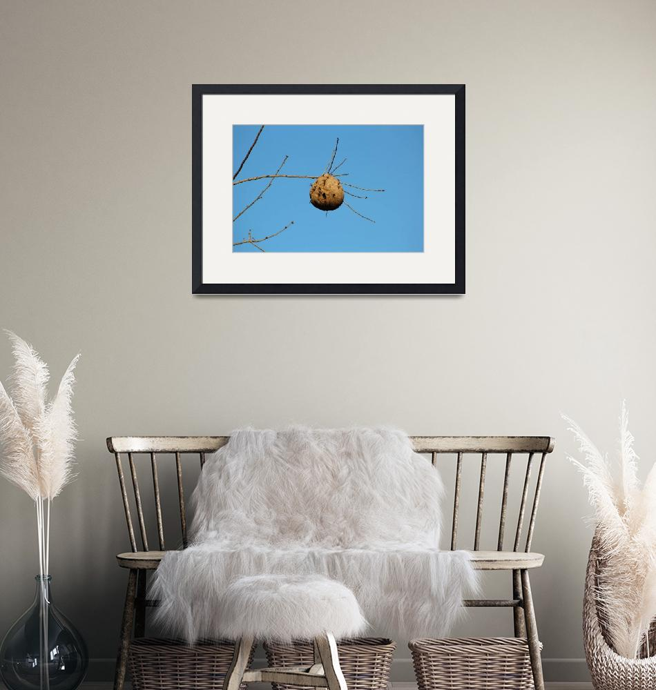 """""""Wasp nest""""  (2014) by chris77"""