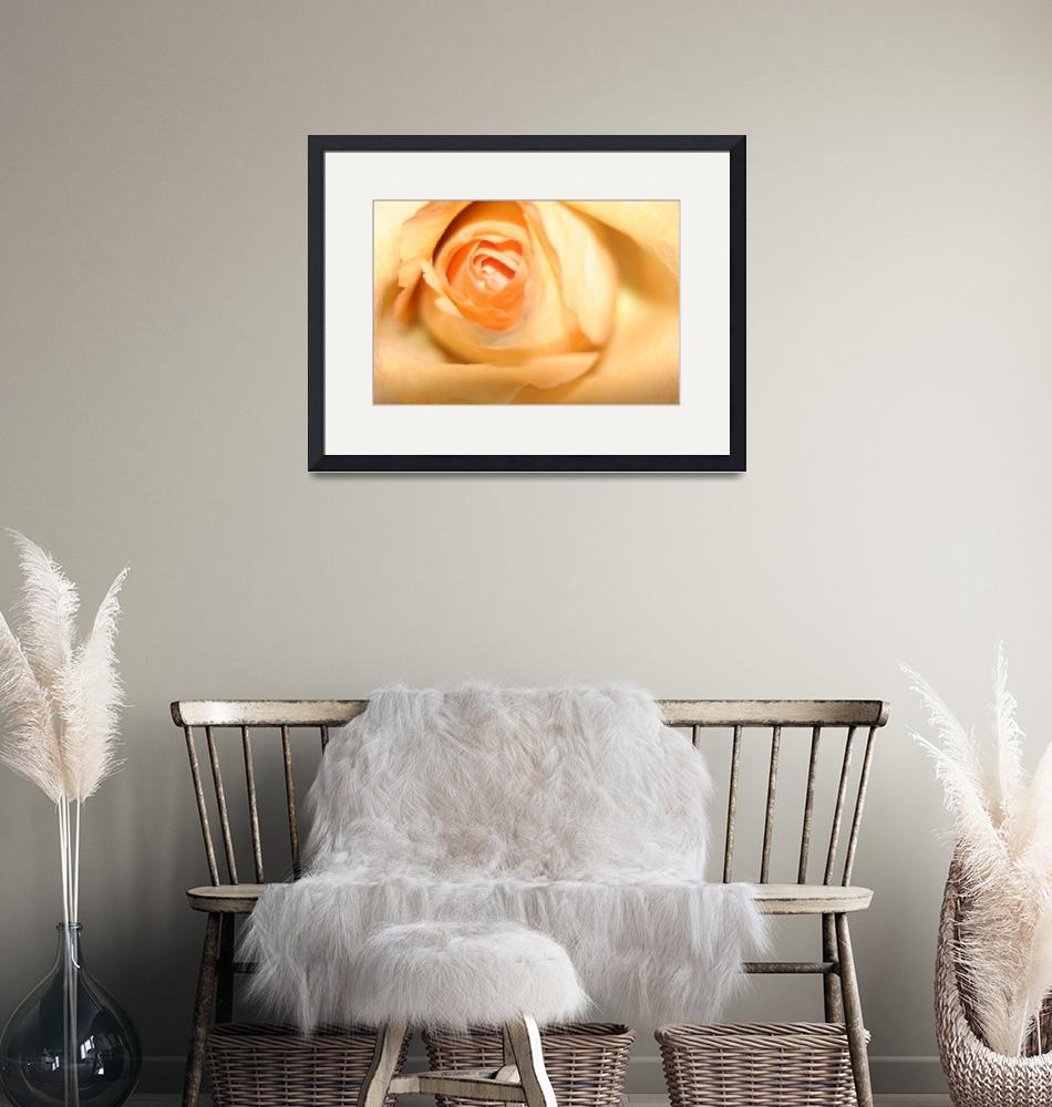 """""""Soft Yellow Rose""""  (2010) by MNTPhoto"""