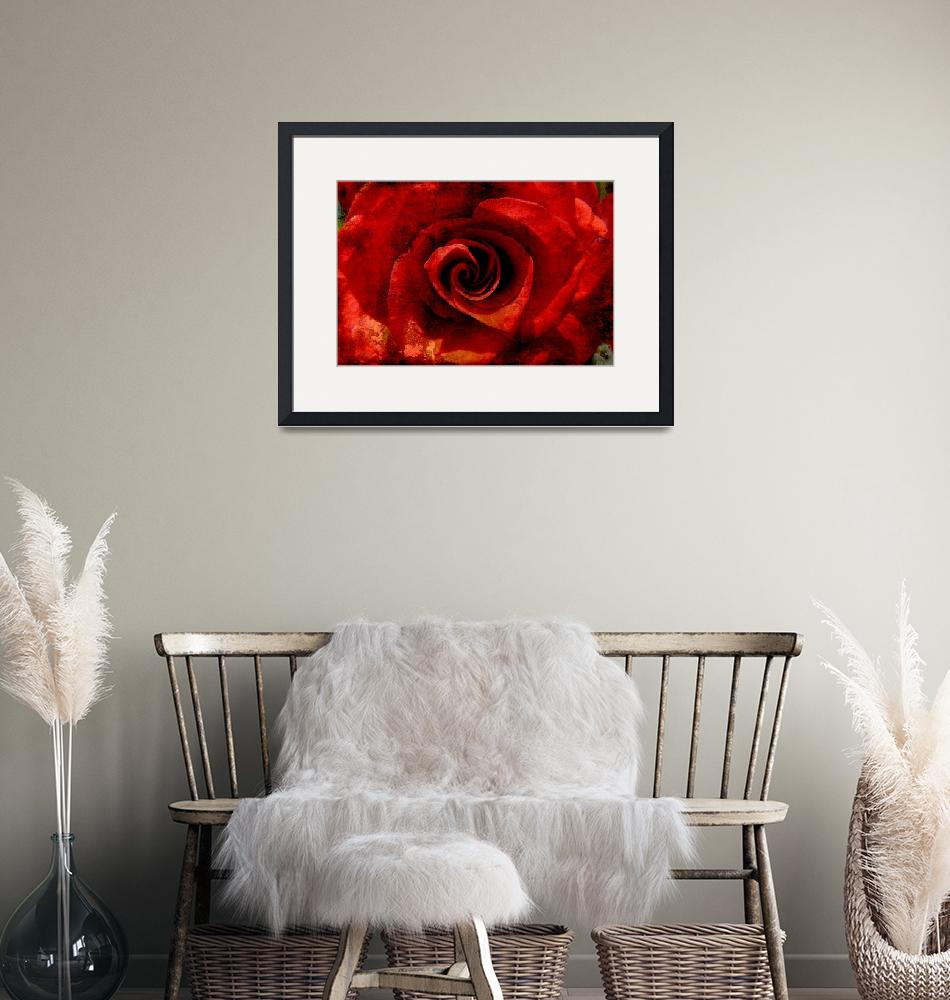 """""""red rose"""" (2010) by Lsb23"""