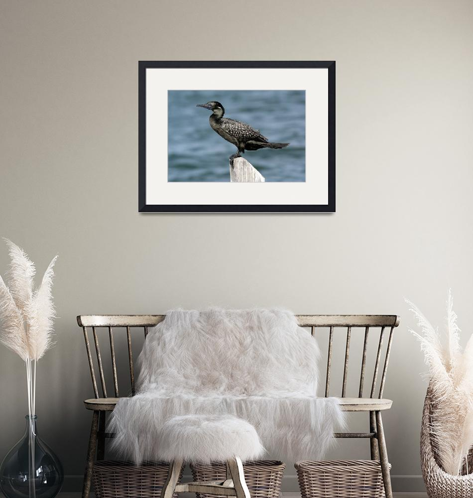 """""""Portrait of a Shag""""  by davejw"""
