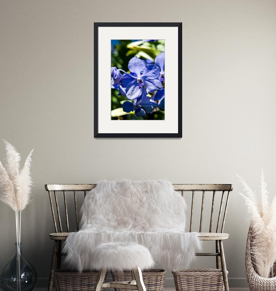 """""""Blue Orchids""""  by visionsofbrahma"""