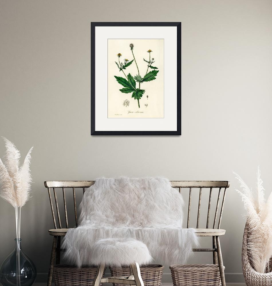 """""""Vintage Botanical Wood avens""""  by FineArtClassics"""