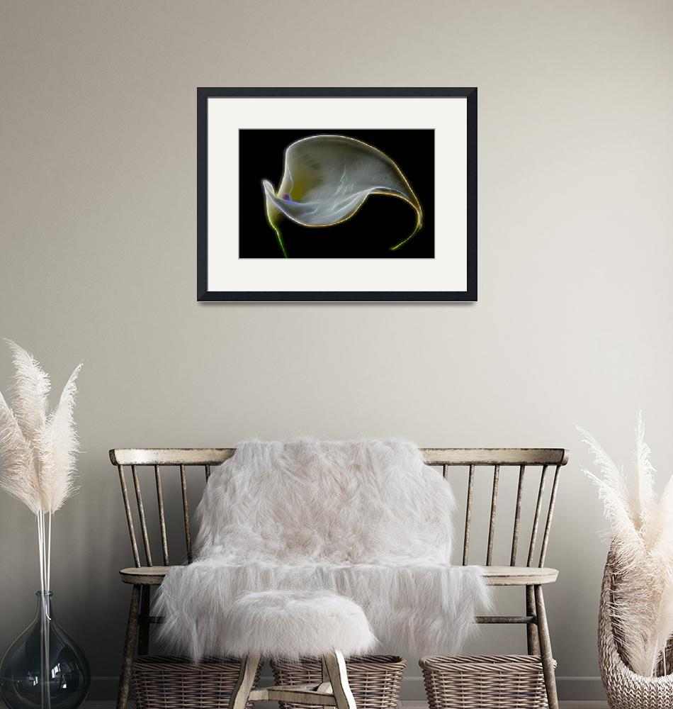 """""""Calla Lily Abstract""""  (2014) by boppintheblues"""