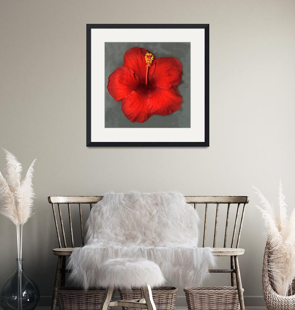"""Red Hibiscus""  (2015) by modernhouseart"