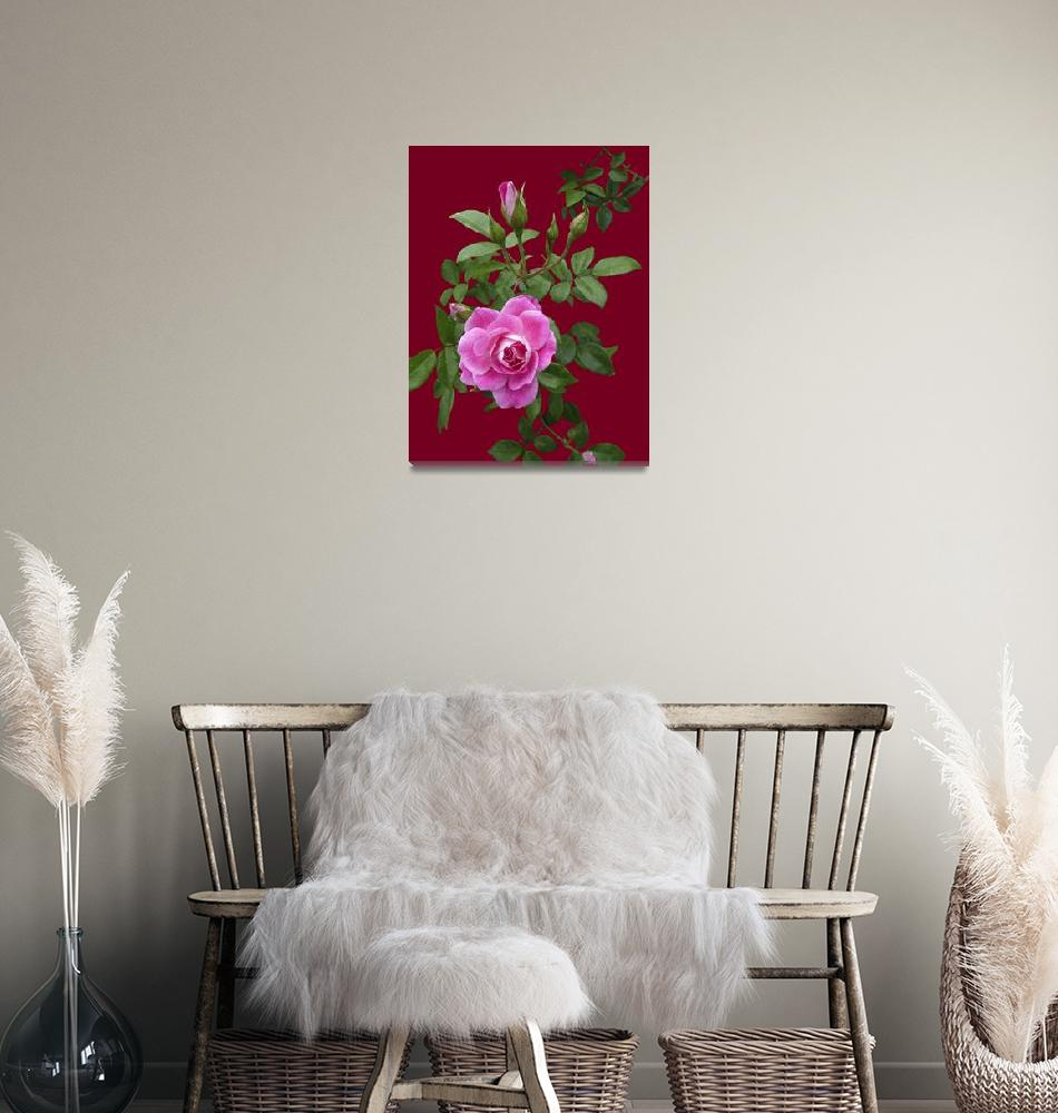 """""""Deep Pink Rose and buds on Burnt Orange""""  (2019) by Corbett"""