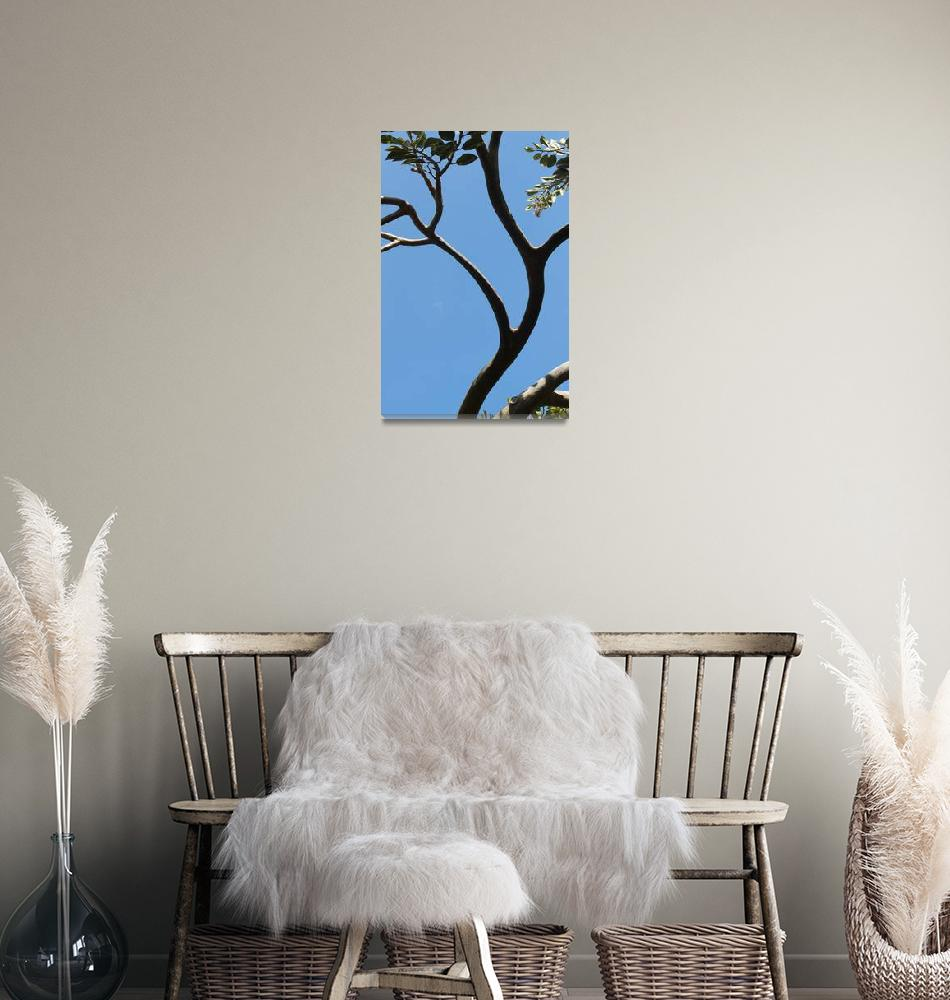 """""""Arched tree""""  (2010) by easyfigure"""