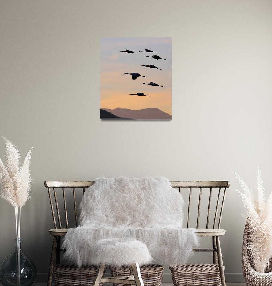 """""""Sunset Sandhill Squadron""""  by fortphoto"""