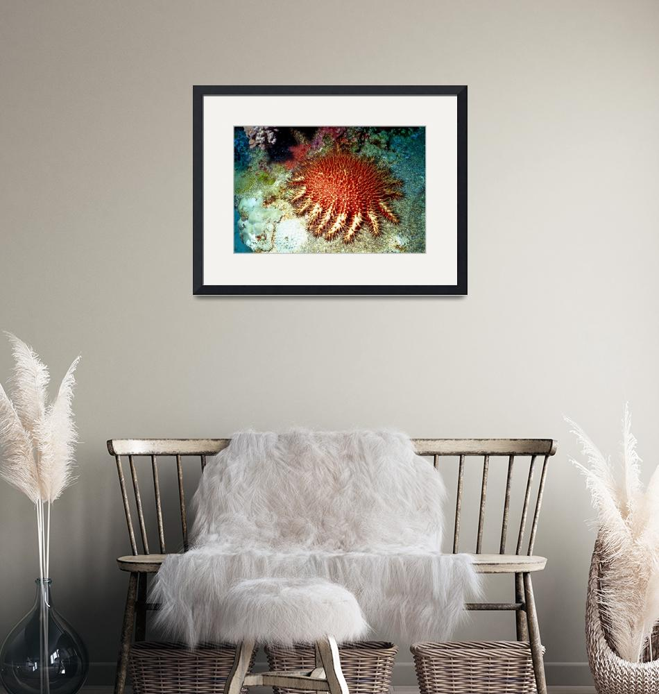 """""""Crown of Thorns Starfish""""  (1997) by JoaoPonces"""
