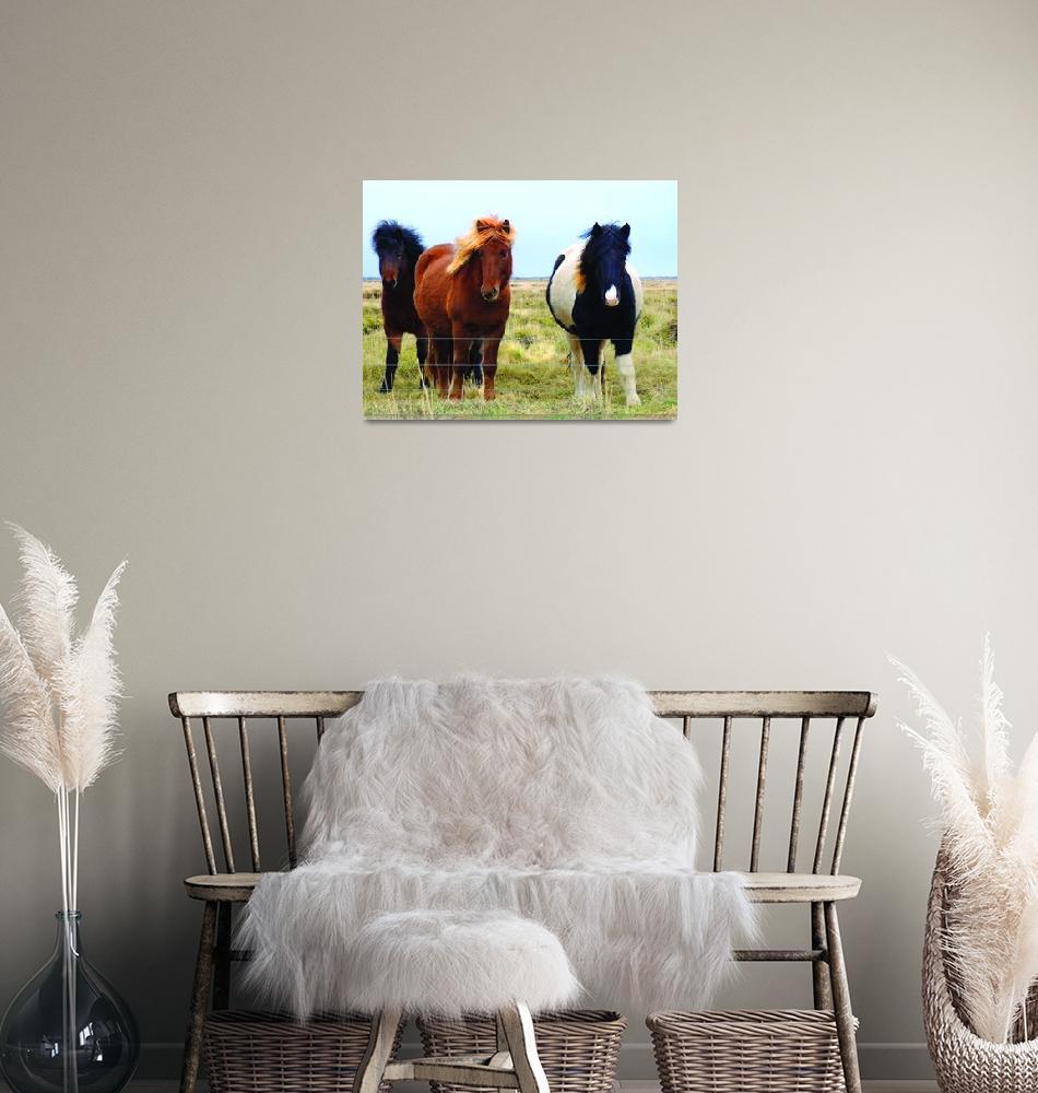 """""""Icelandic Horses in the Wind""""  (2013) by Karlita246"""