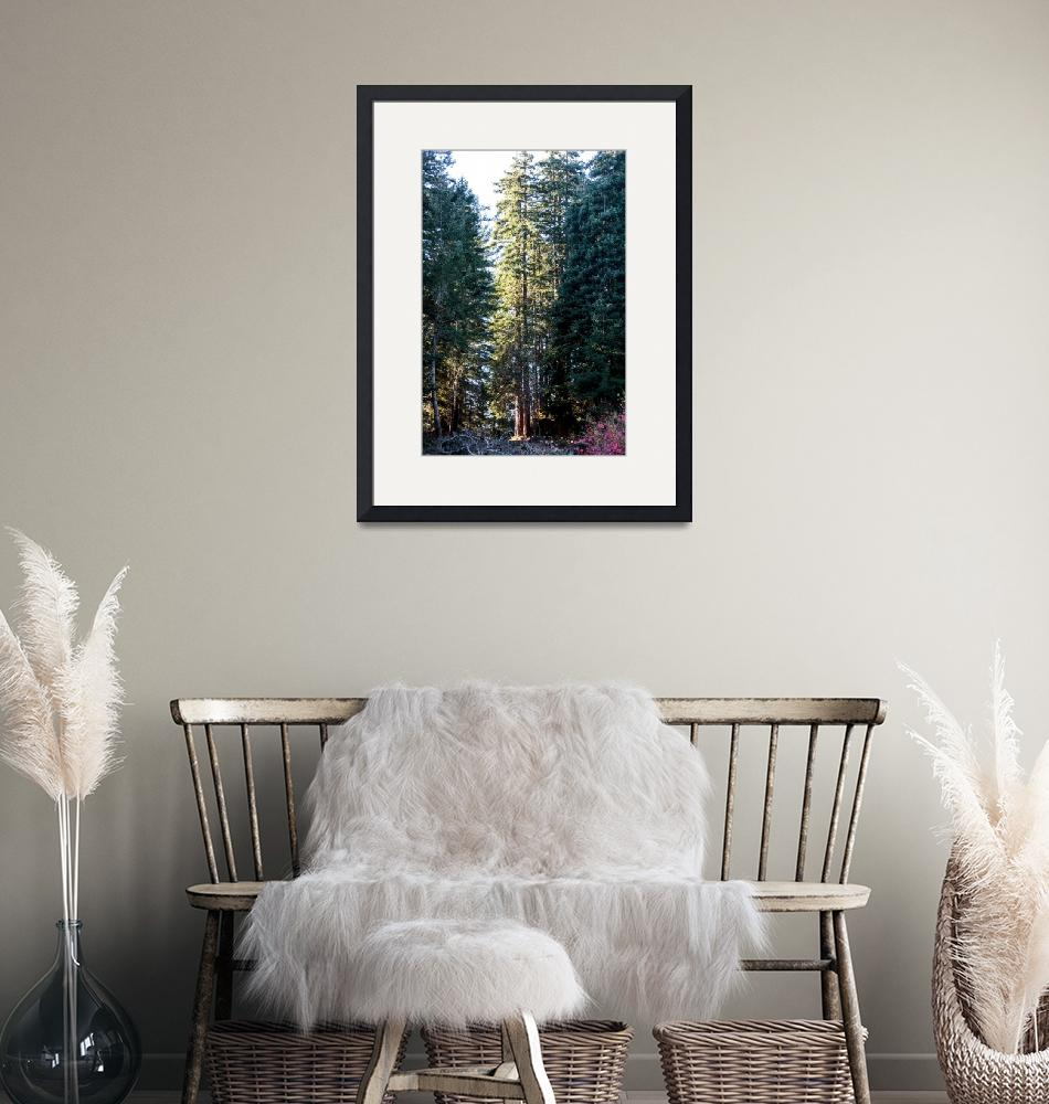 """""""Sequoia sempervirens""""  (2014) by Sonja"""