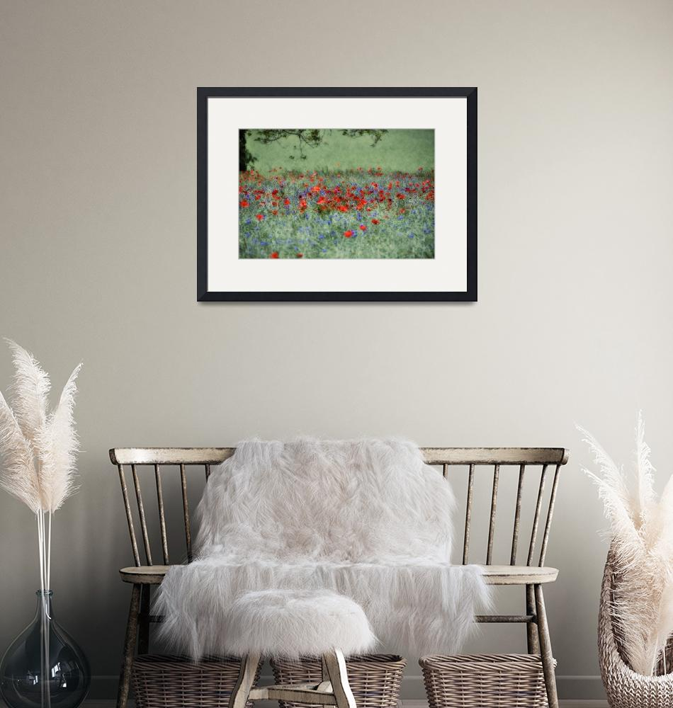 """""""Poppies in a field""""  (2010) by surinamensis"""