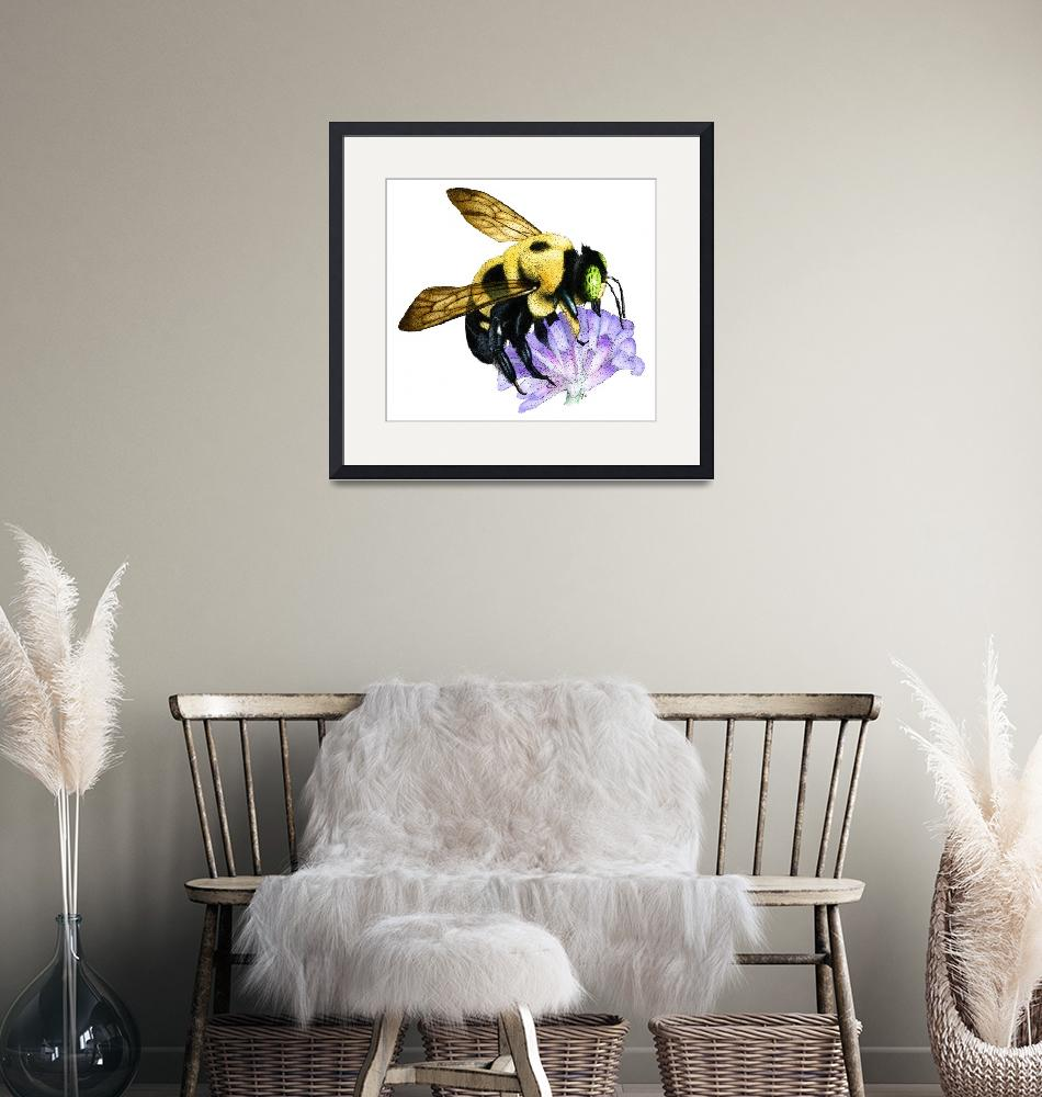 """""""Common Eastern Bumble Bee""""  (2009) by inkart"""