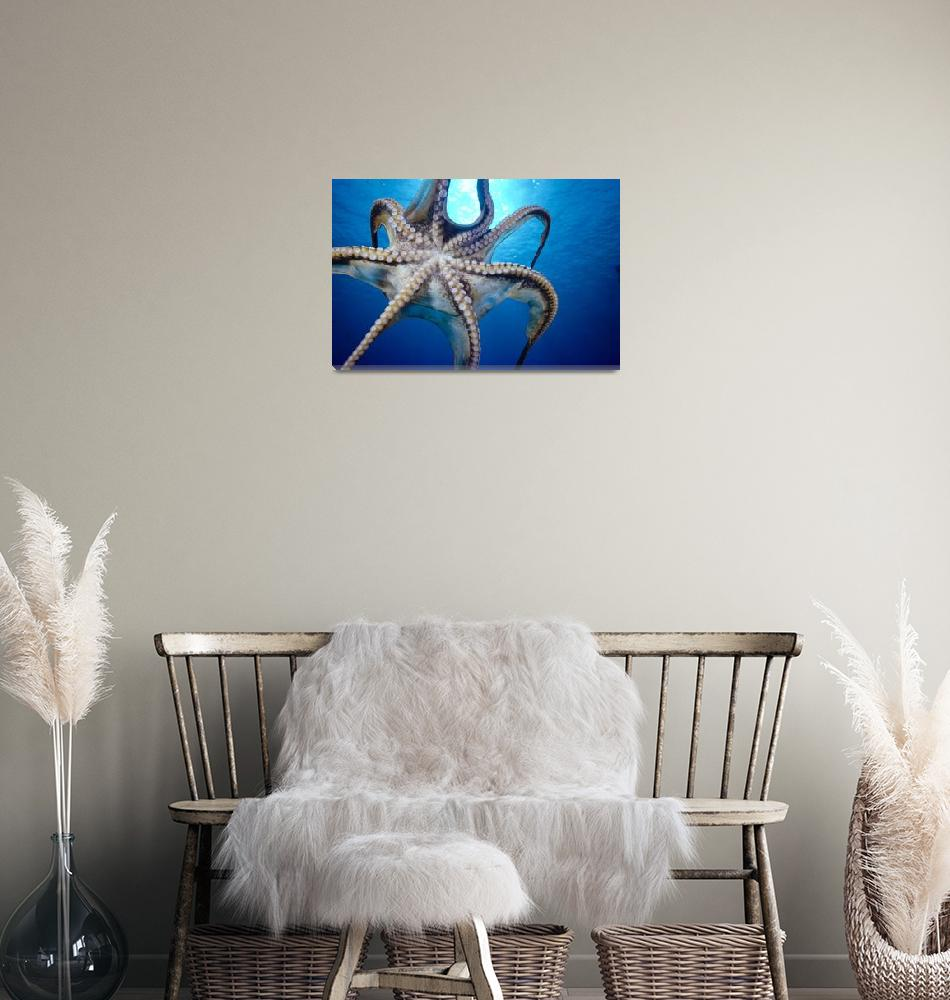 """Hawaii, Day Octopus""  by DesignPics"