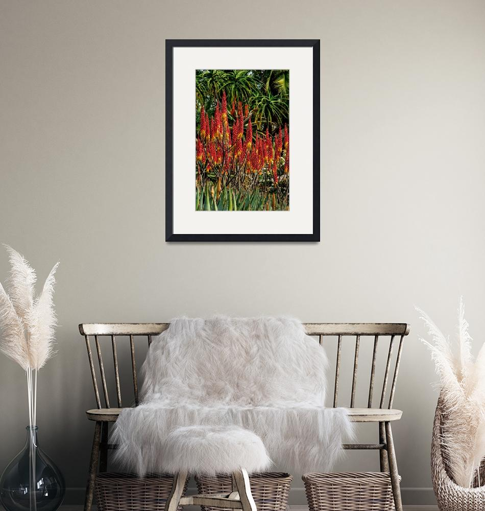 """""""Red Aloe Petricola""""  by craigbrewer"""