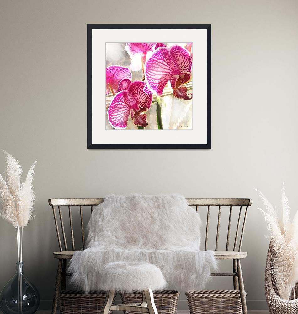 """fuschia orchids""  (2006) by pietrastone"