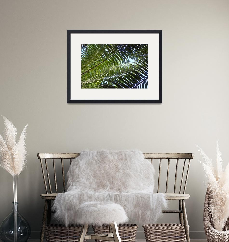 """""""Date Palms""""  by rjhphotos"""