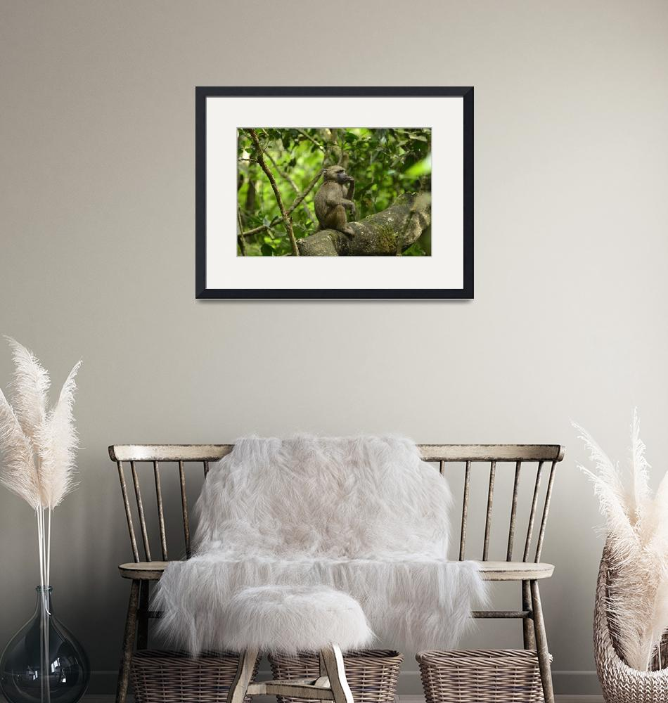 """Baboon in Tanzania Jungle""  by Teager"
