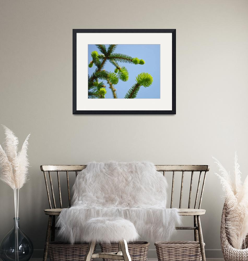 """Conifer Pine Tree Art prints Blue Sky Forest Lands""  (2013) by BasleeTroutman"