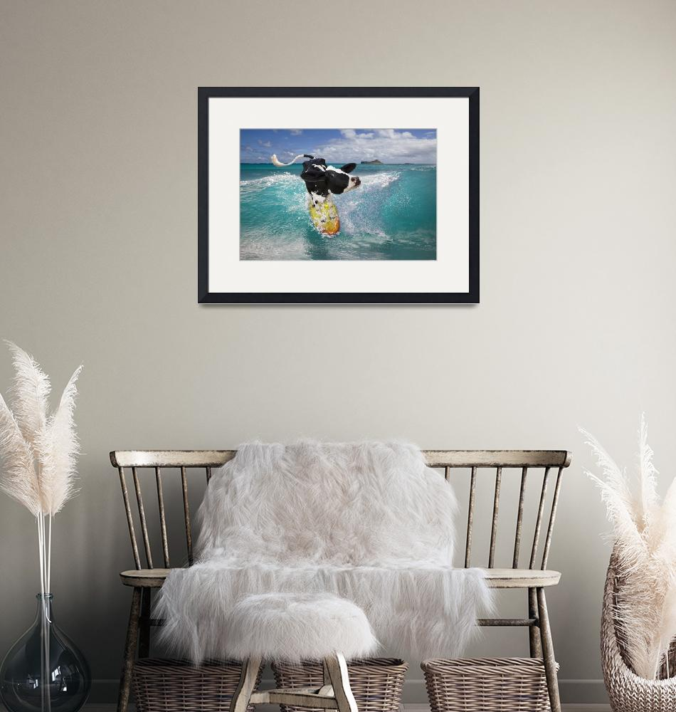"""""""Surfing Holstein cow riding ocean wave in Hawaii""""  by StephanieDRoeser"""