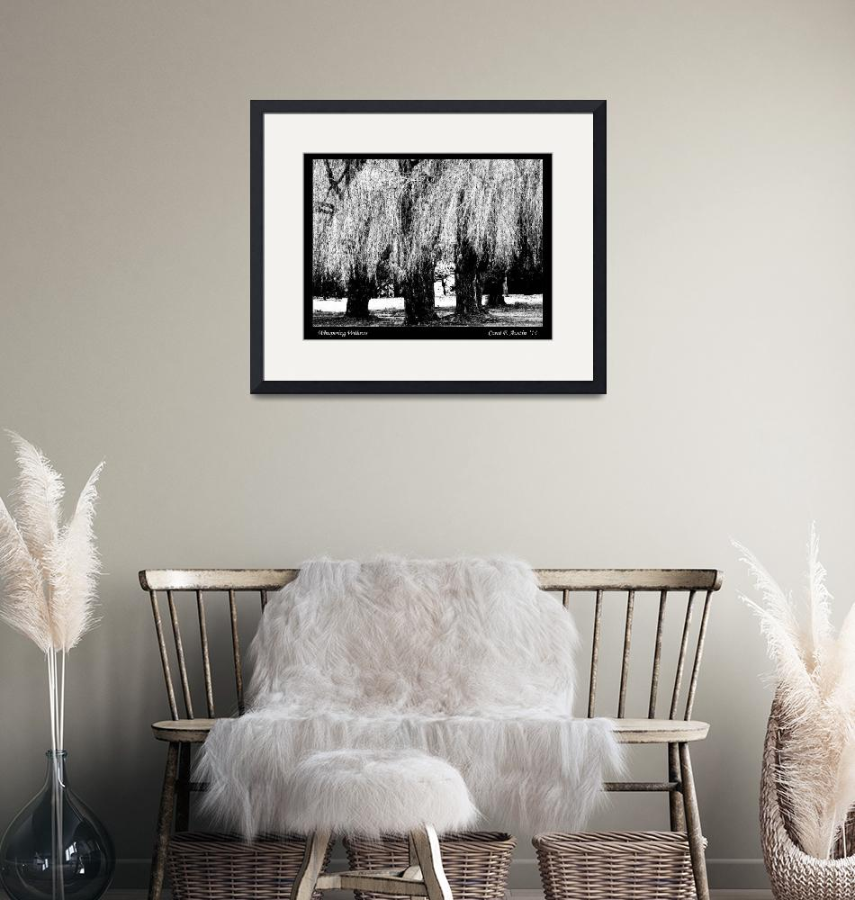 """""""Whispering Weeping Willows BW fine art print"""" (2014) by PhotographsByCarolFAustin"""