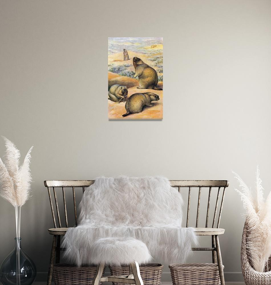 """The bobak marmot (Marmota bobak)""  by markkumurto"