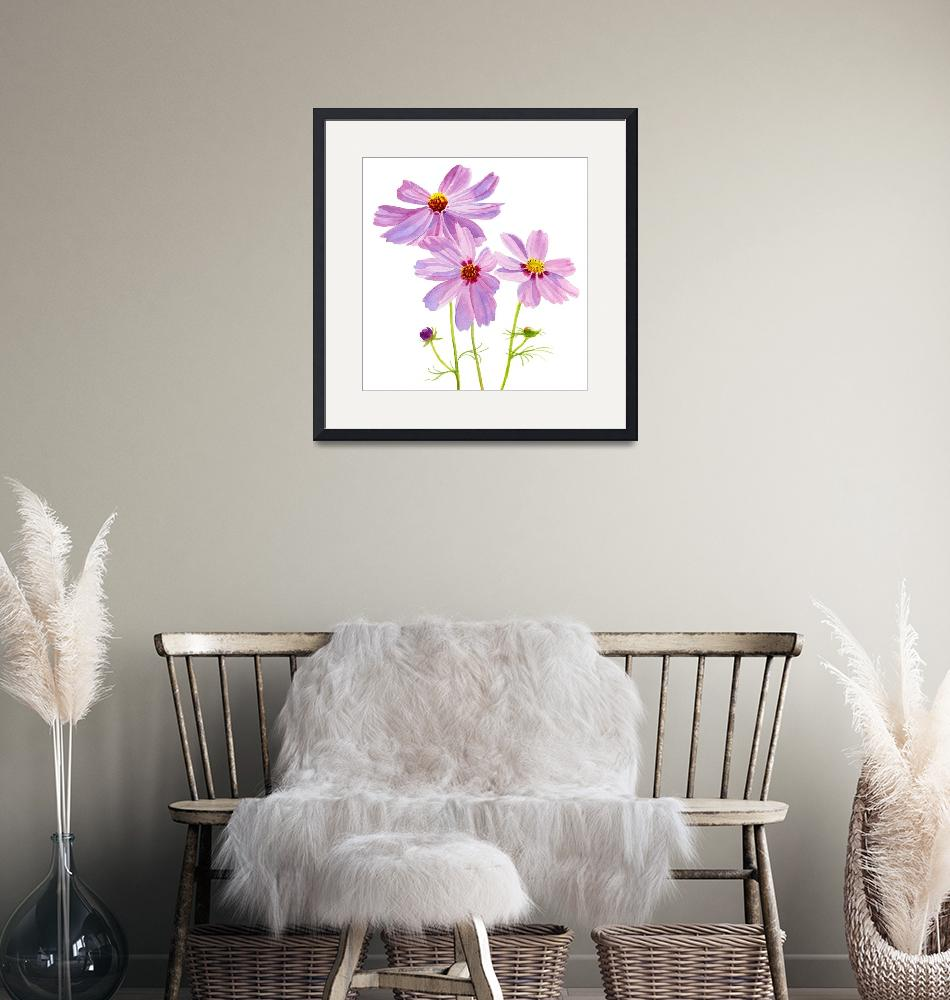 """""""three pink cosmos blossoms square desi brush, crpt""""  (2012) by Pacific-NW-Watercolors"""
