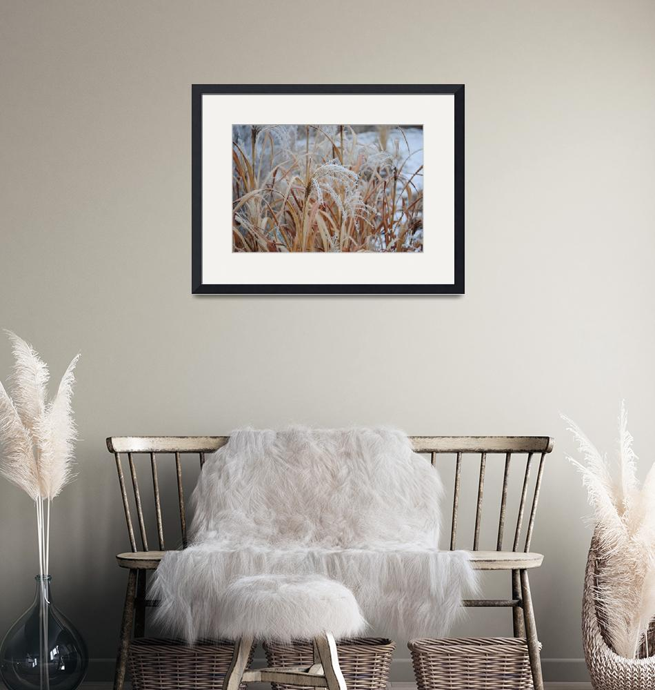 """winter zebra grass""  (2010) by RoseannPerez"