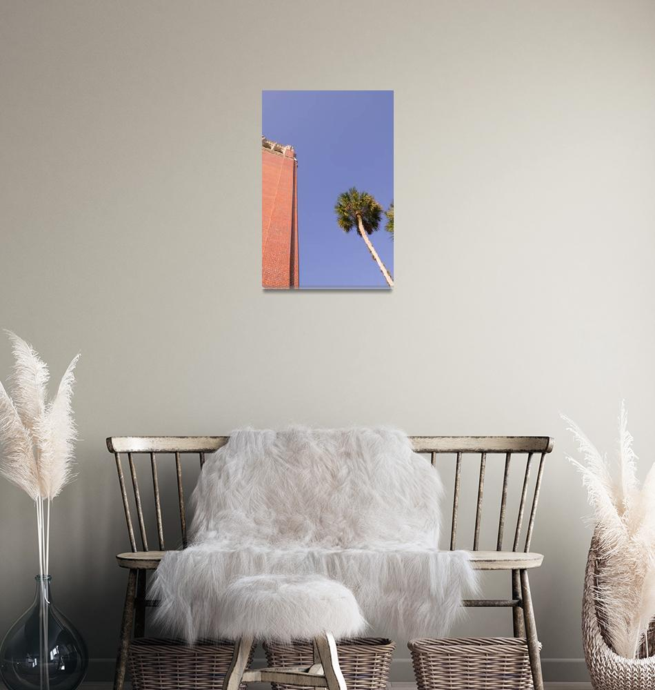 """""""Century Tower & Palm Tree, University of Florida""""  by fineartphoto"""