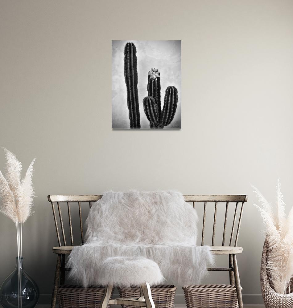 """""""Cactus #2""""  (2009) by johncorney"""