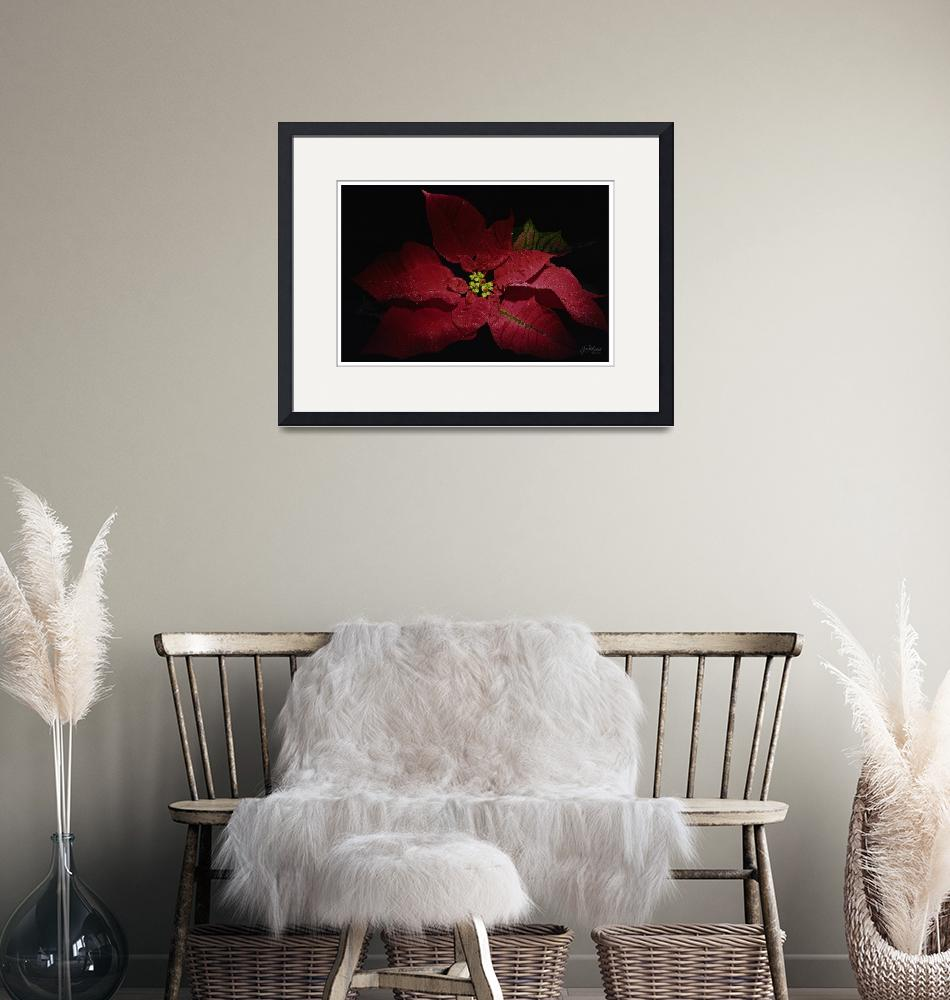 """artseeart Poinsettia Holiday Floral by georgia""  (2003) by artseeartgeorgiabrauer"