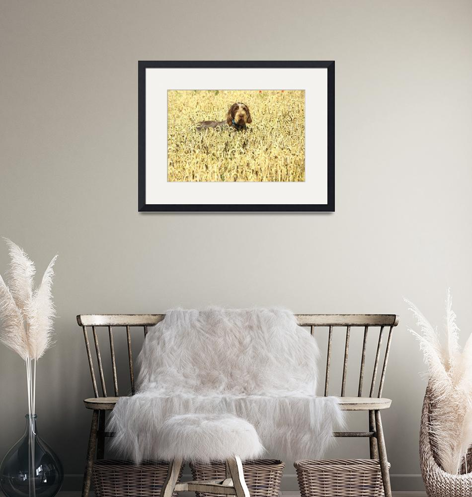 """""""Dog in the Cornfield""""  (2007) by loversdream"""