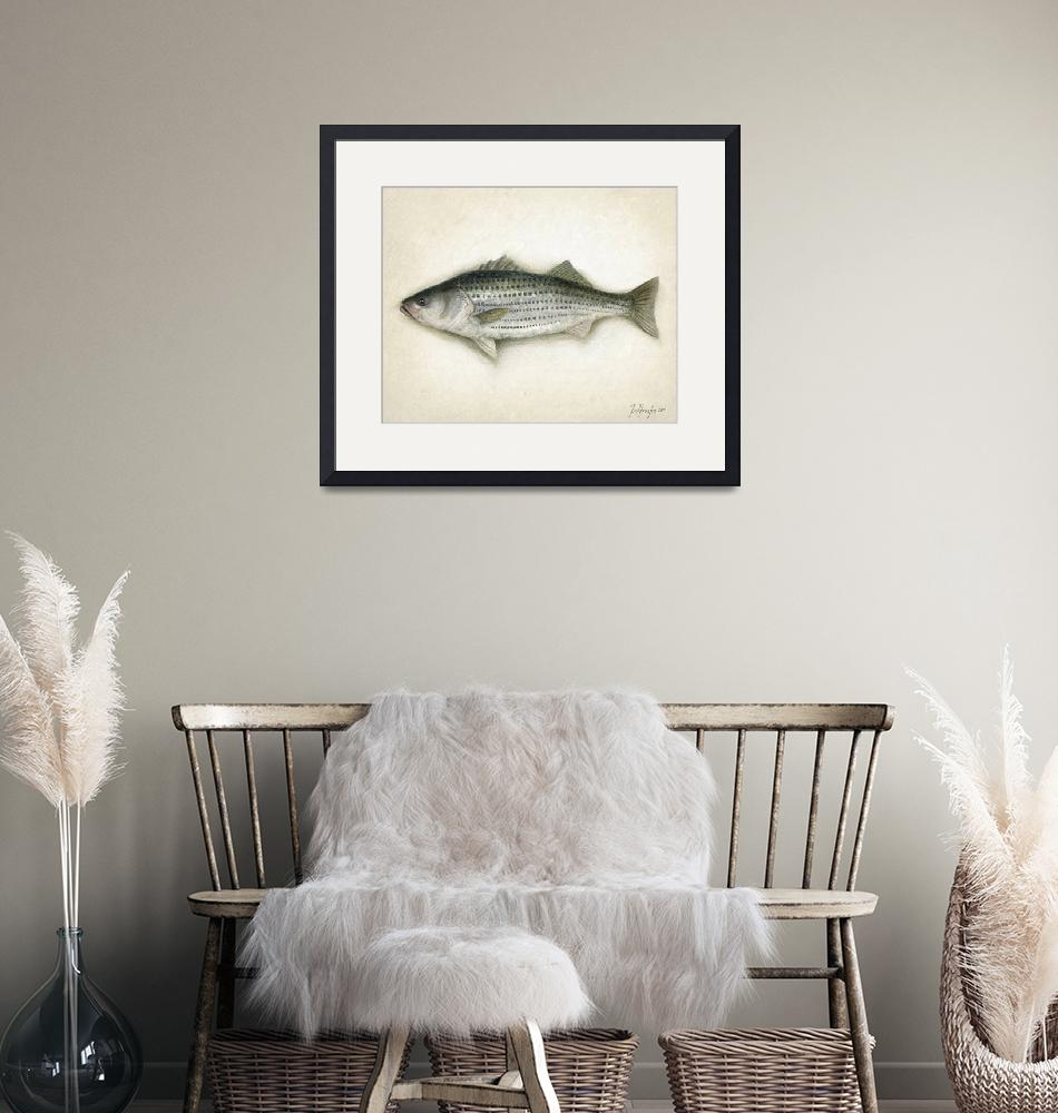 """Striped Bass""  (2011) by Karen"