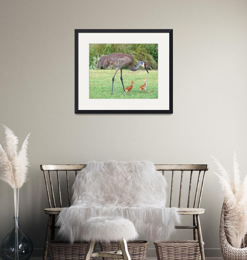 """""""Sandhill Crane with Chicks""""  (2008) by stockphotos"""