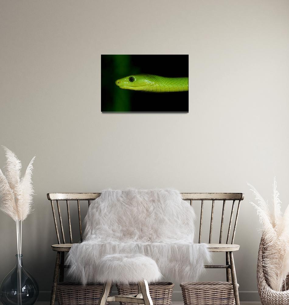 """Green Mamba""  (2005) by stevegeer"