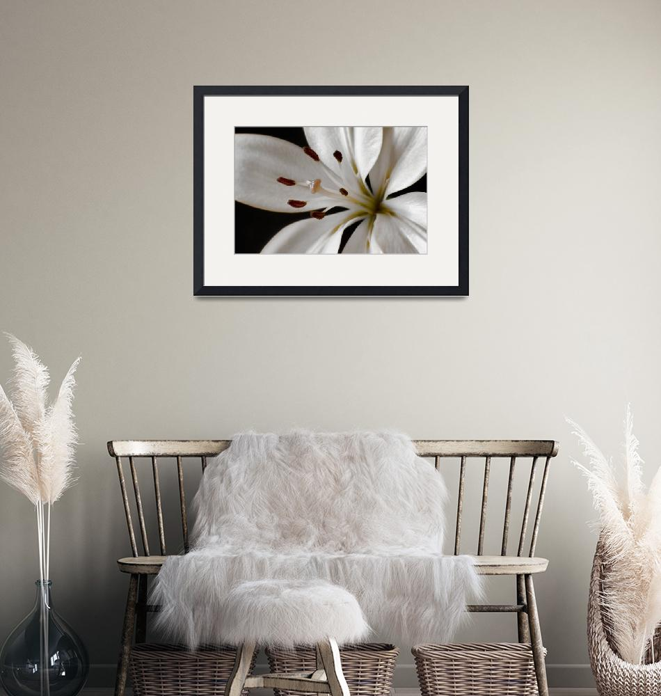 """""""Lily in the Light""""  (2013) by boppintheblues"""