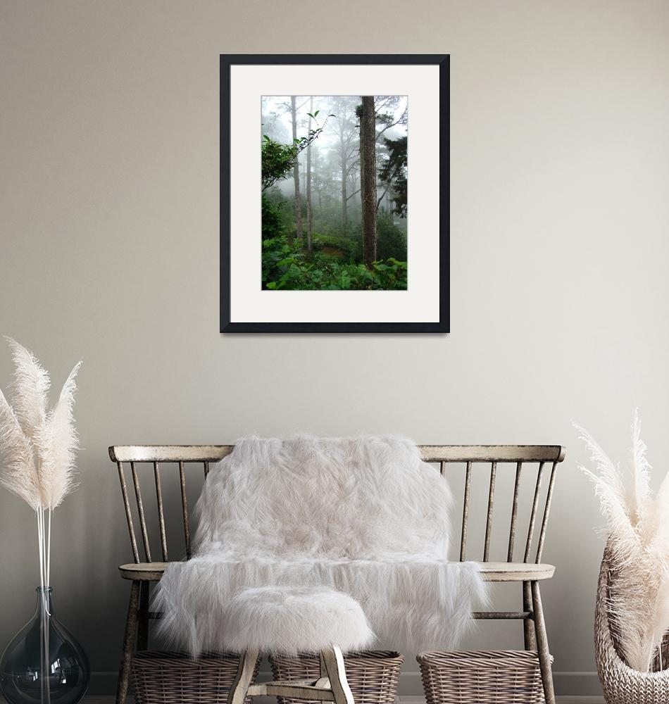 """""""Foggy Forest""""  (2009) by alymariephotography"""