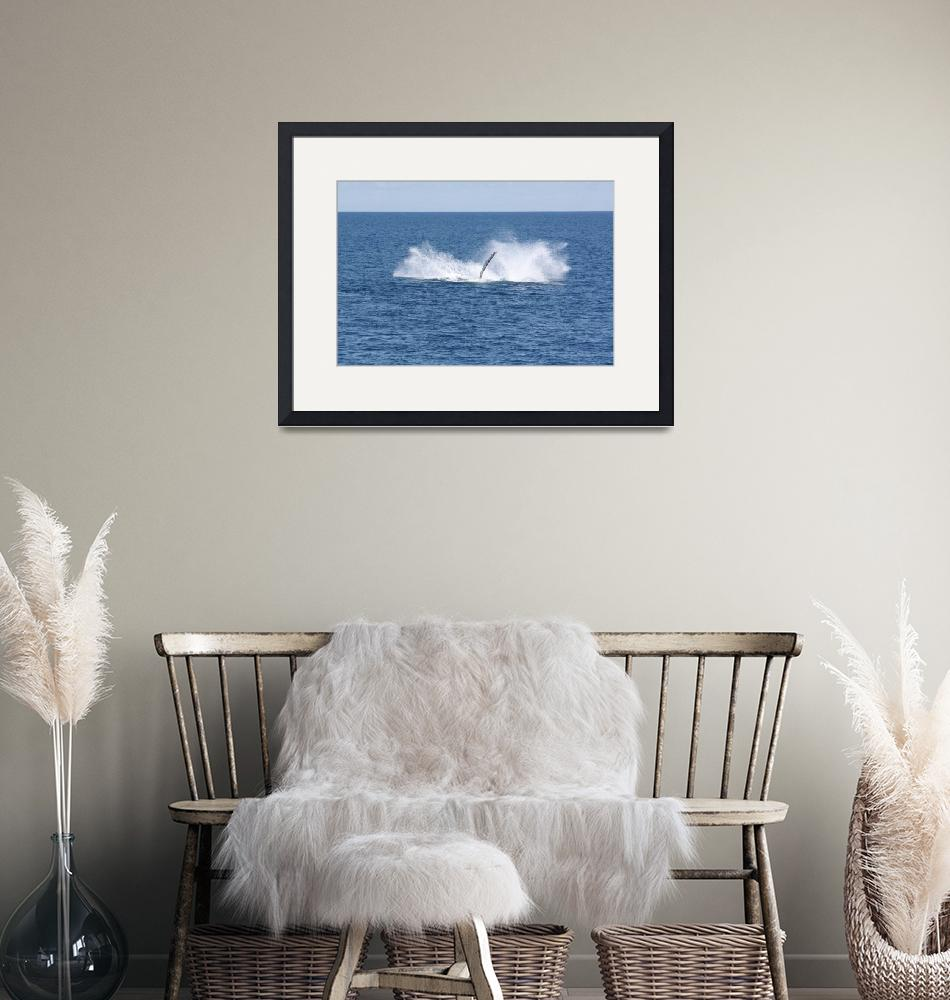"""""""NaP_ Whale Watching190a""""  by nevilleprosser"""