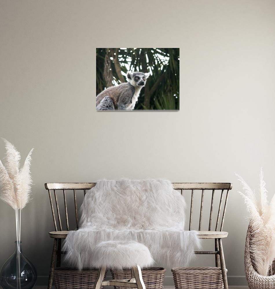 """""""Ring Tailed Lemur""""  (2009) by pamelamcnamara"""
