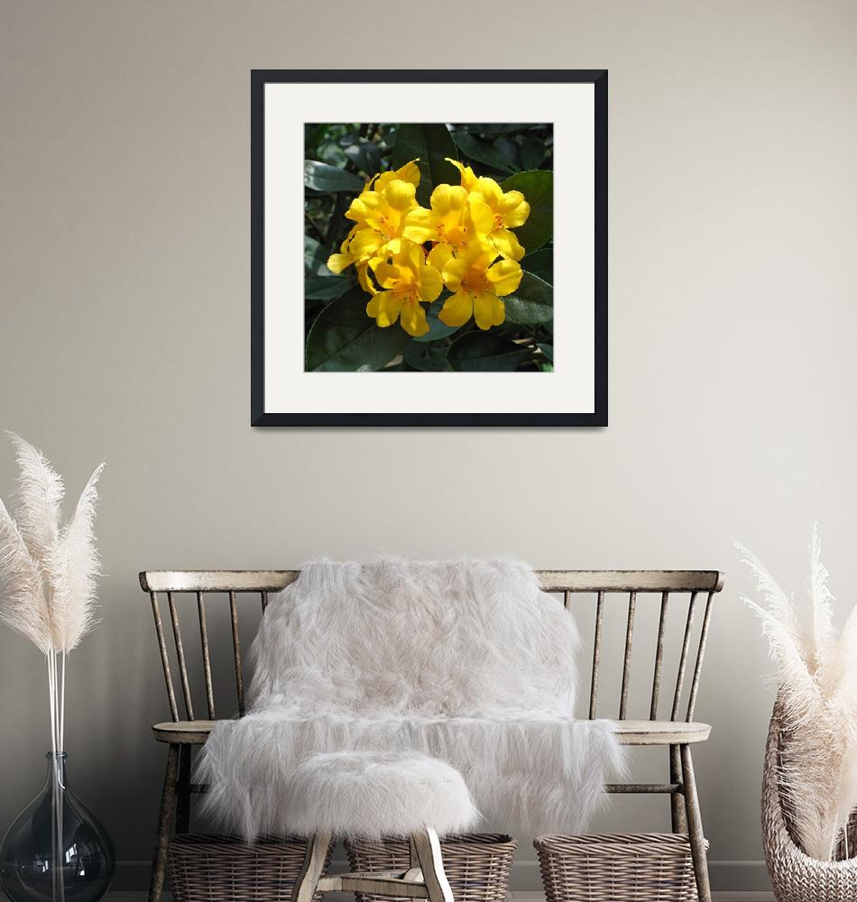 """Yellow Rhododendron""  (2014) by FantaSeaArt"