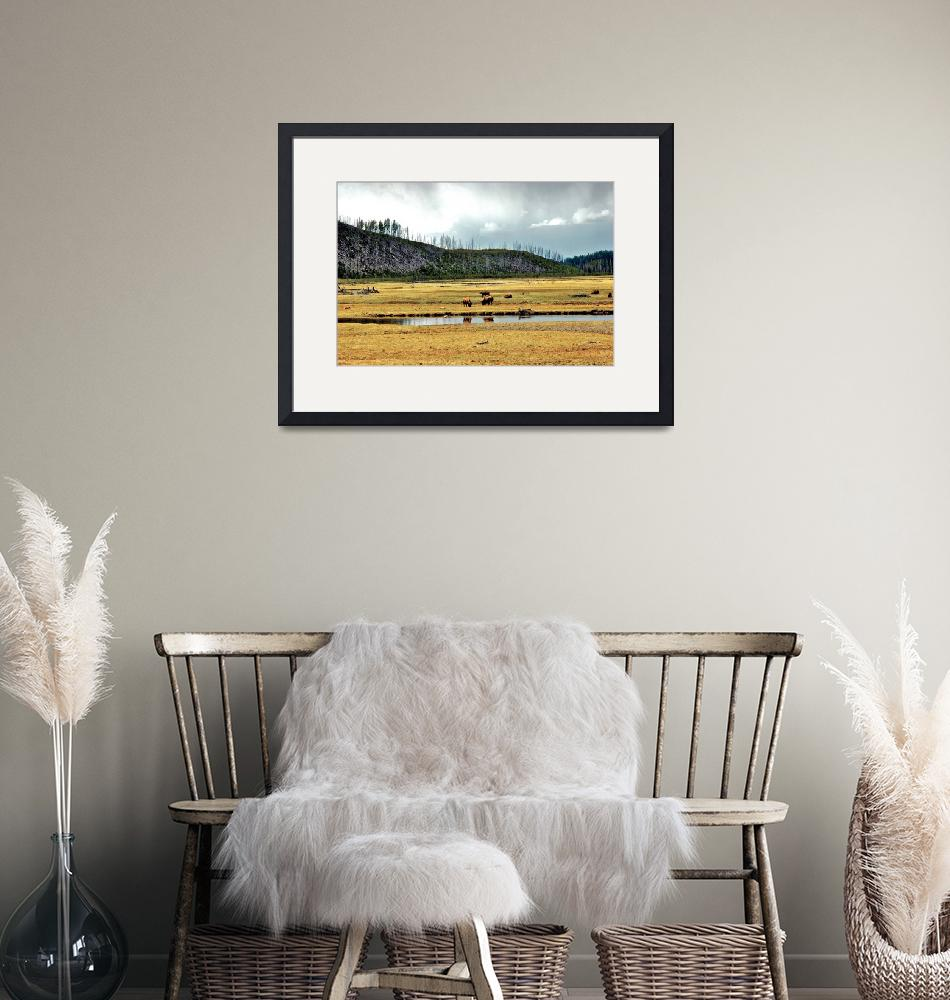"""""""Yellowstone  bison field""""  (2006) by eyecontact"""