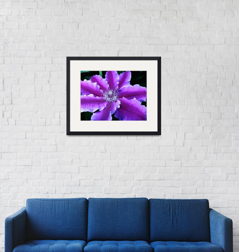"""""""clematis"""" by rgtmum"""