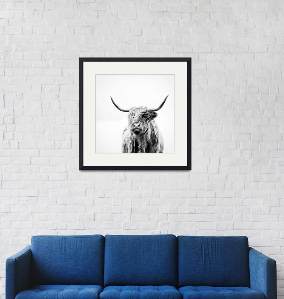 """""""portrait of a highland cow (square crop)""""  (2011) by doritfuhgphotography"""