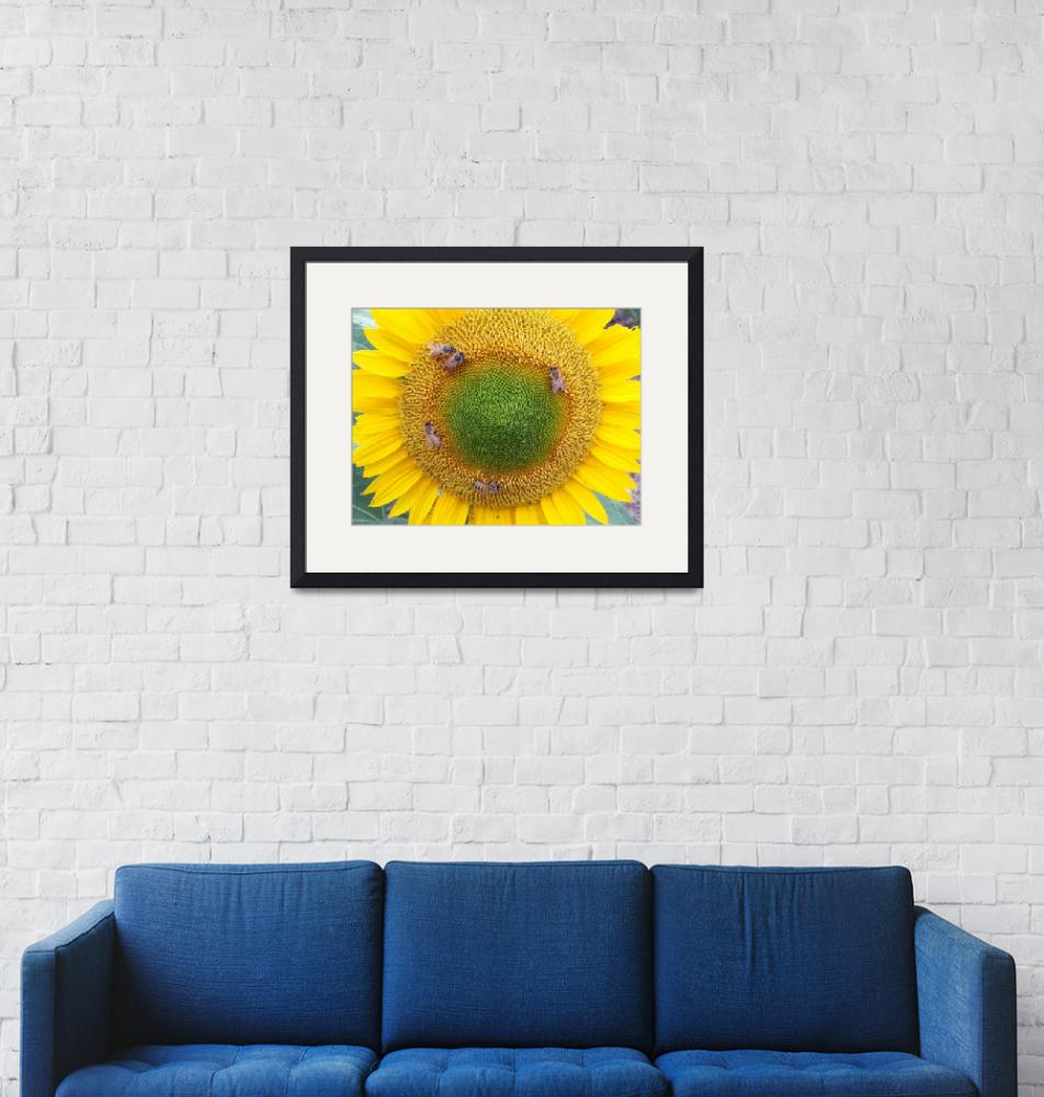 """Sunflower with Bees""  (2010) by longdistgramma"
